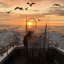 Heading home after a night on the bass.  - Ilfracombe Sea Safari, North Devon