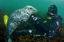 Friendly Seal encounter - Ilfracombe Sea Safari, North Devon