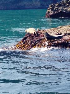 Seals at Lundy - Ilfracombe Sea Safari, North Devon