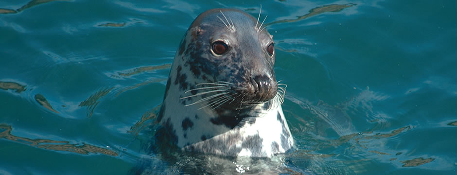 Swimming with seals is available from May - September